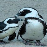 Doesn't Matter if You're an Employee or a Penguin – It's All About Taking Action